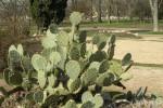 des_cactus