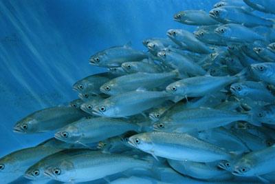 aquaculture-20