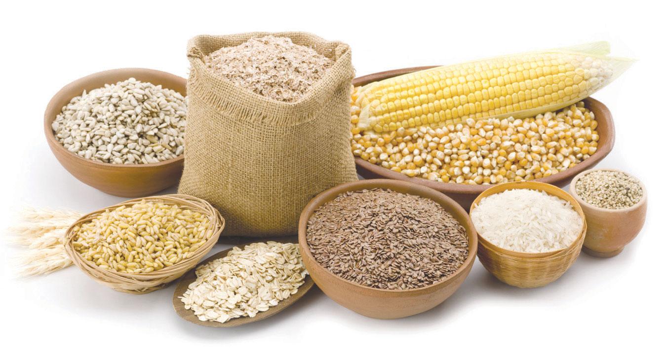 قطاع البذور في المغرب