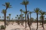 photo 2 palmeraie