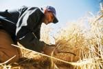 l'agriculture changement climatique