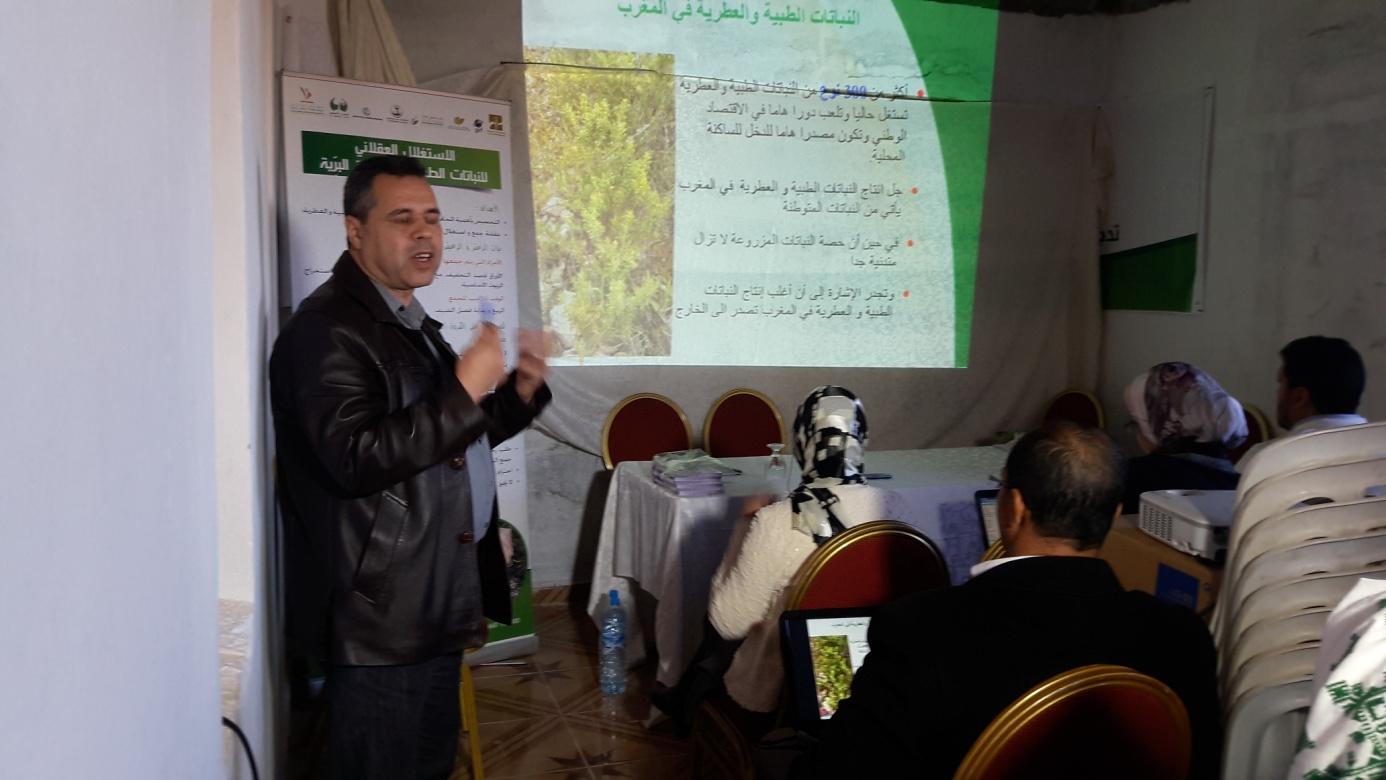 Dr. Sedki Mohamed
