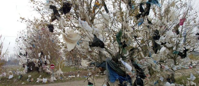 Plastic bags in a tree