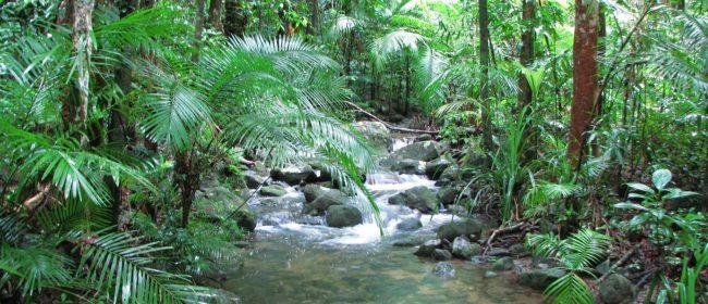 tropical-rainforest