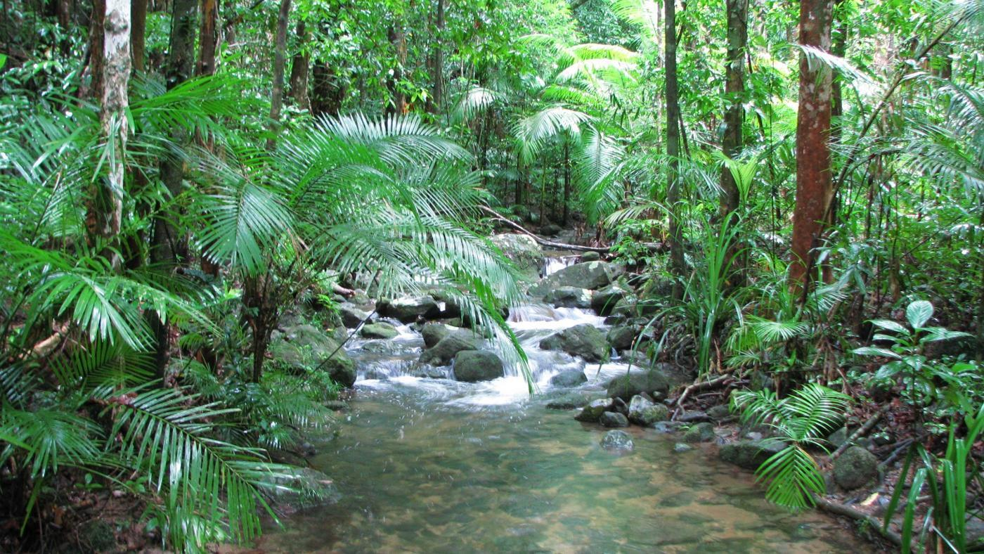 tropical-rainforest