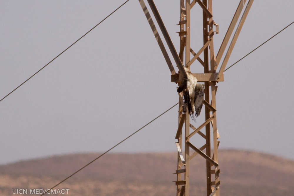 Rapace electrifié © Íñigo Fajardo